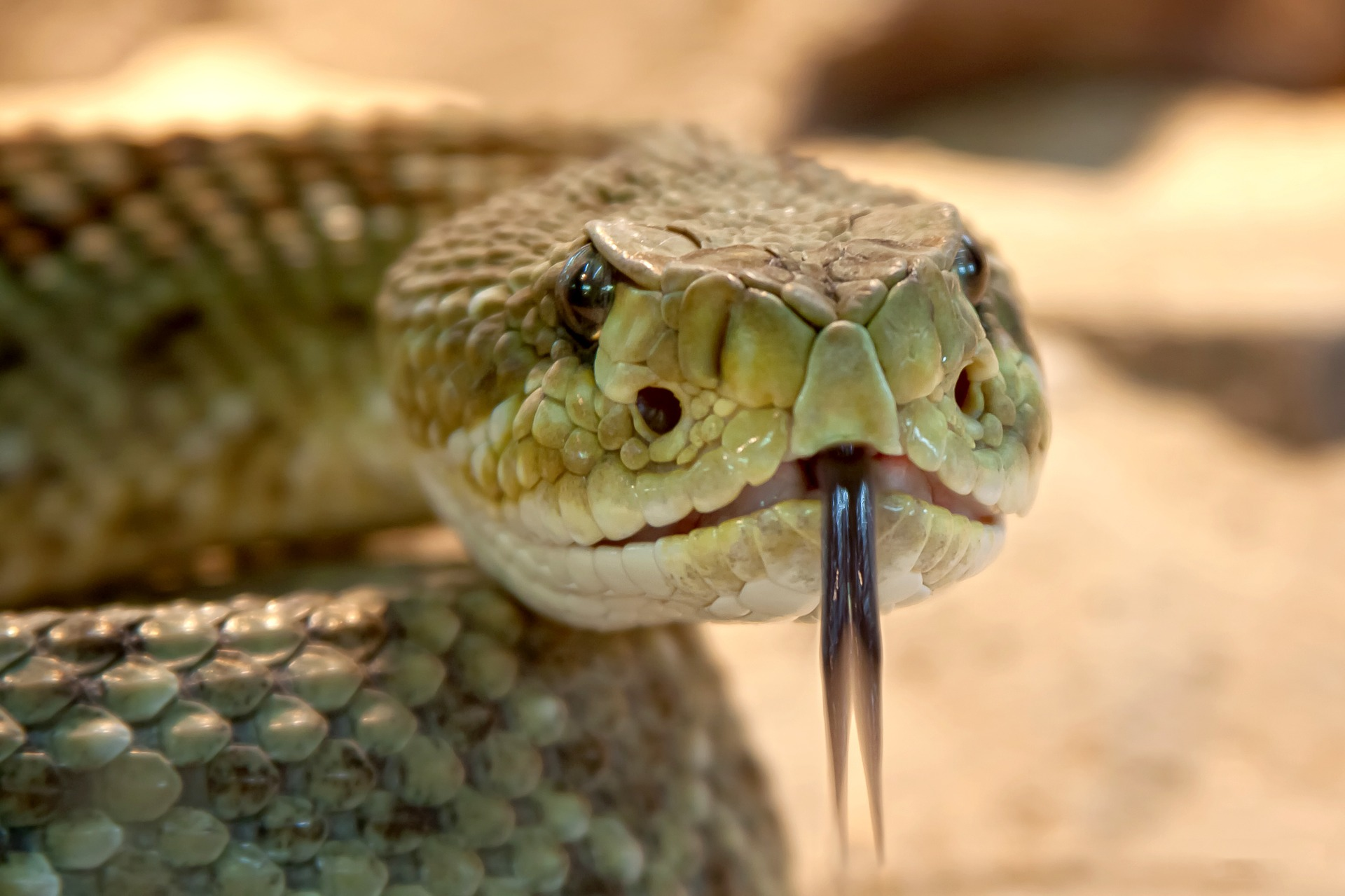 Top 15 Deadliest Snakes In The World